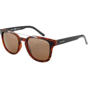 Alpina Sylon Glasses black-havana matt black-havana matt