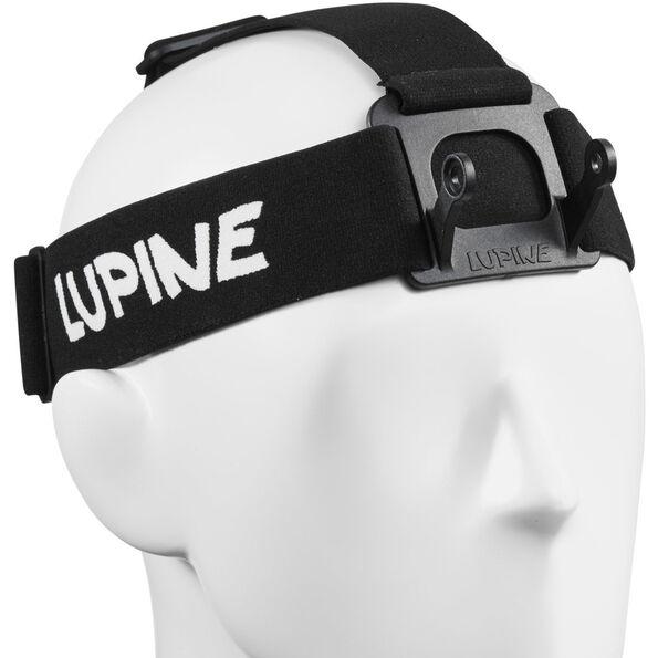 Lupine Wilma / Wilma R Stirnband