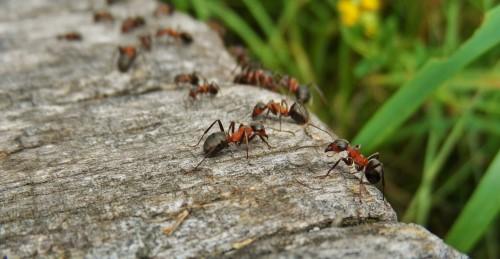 Insekten - Campen auf freien plätzen