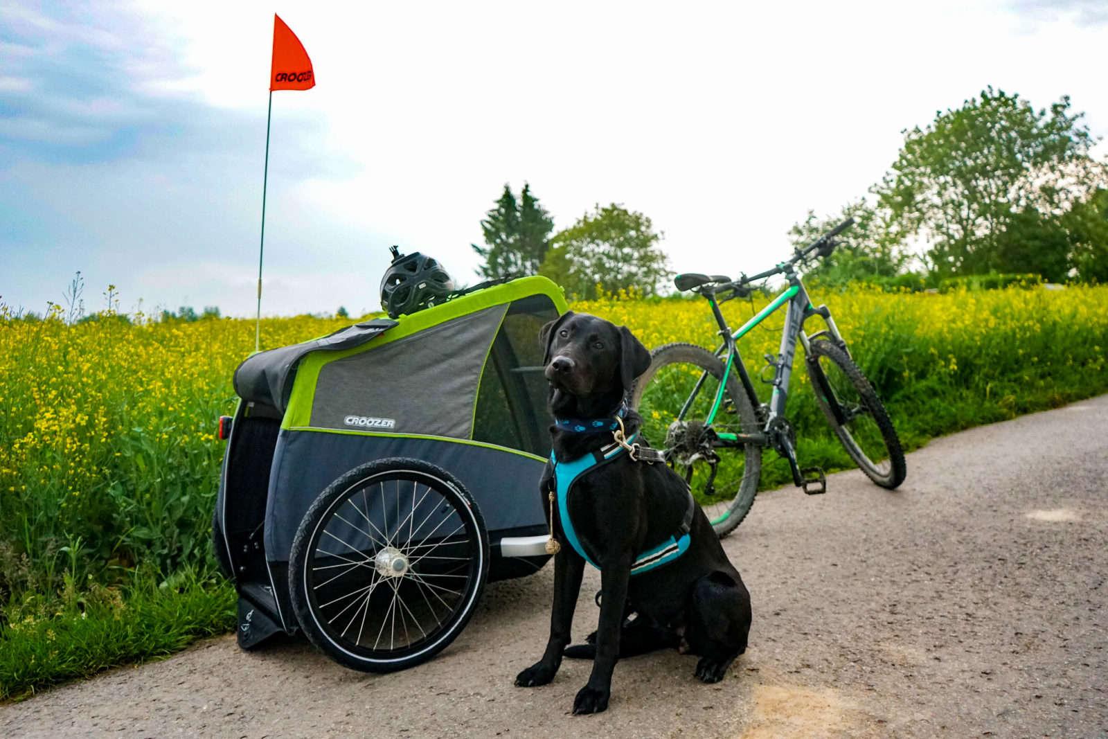 Produkttest Dog XL Anhänger für Hunde