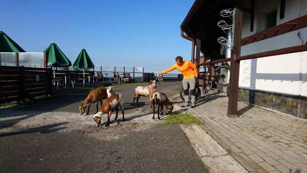 Natur - Erzgebirge - MTB Tour - Ziegen füttern