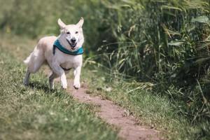 Training für Fahrradfahren mit Hund