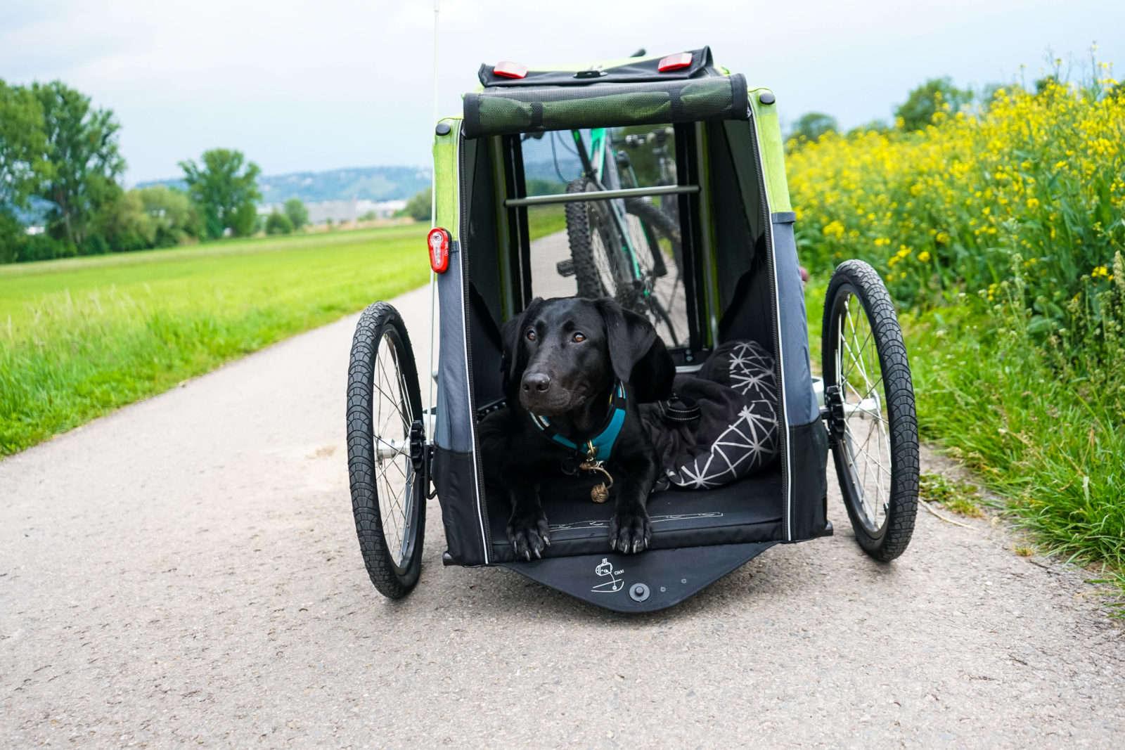 Produkttest - Croozer Hundeanhänger für Fahrrad